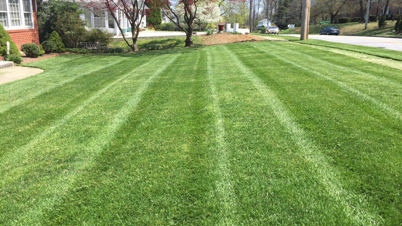 lawn care Your yard is an important extension of your home and with today's busy schedules, low maintenance care is key let ace hardware help with lawn and garden essentials.